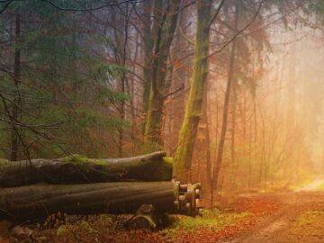 povestea lemnului